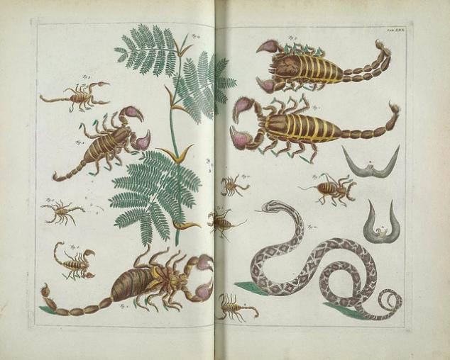 snakes_scorpions